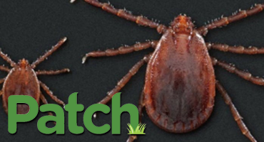 Rare Tick Found In NJ An Emerging Threat CDC Says