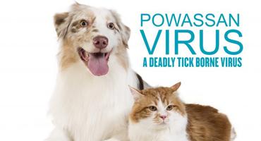 Powassan Virus and Pets