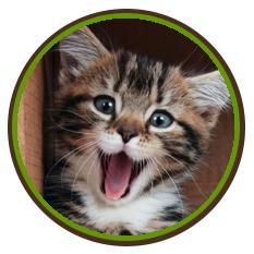 Happy Tick Free Cat