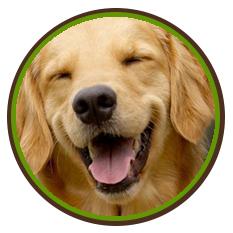 Happy Dog No Lyme Disease